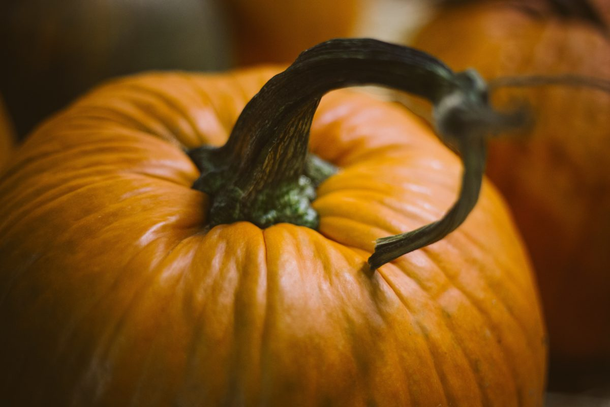 Free B2B Halloween Catalog Template